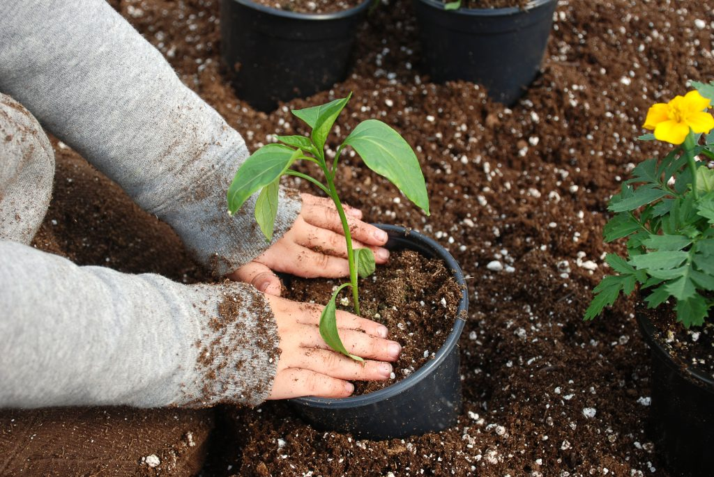 Planting shrubs in the garden
